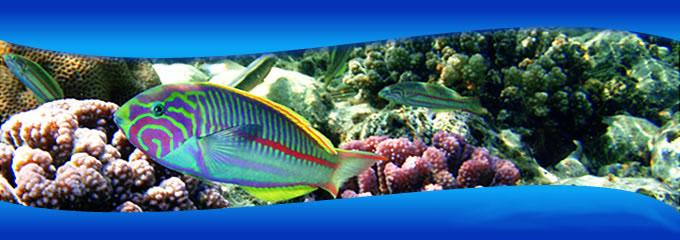 Tropische vissen en koralen kun je zien tijdens snorkelen en duiken