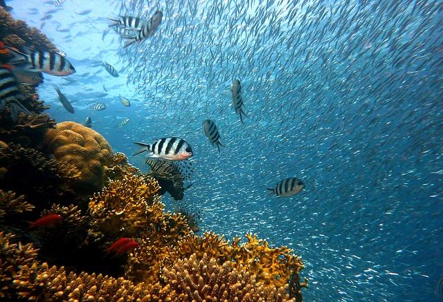 Maak kennis met de prachtige onderwaterwereld tijdens het duiken
