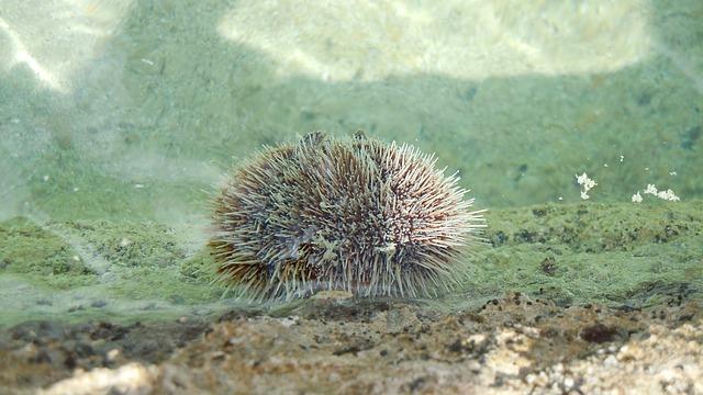 veilig snorkelen: kijk uit voor zeeegels ondiep water...