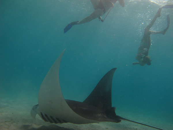 Snorkelen op Curaçao met reuzenmanta's