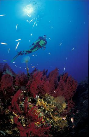 duiken in Port-Cros