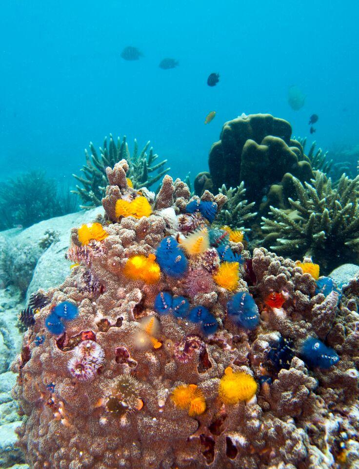 duiken op koh tao thailand bij whiterock