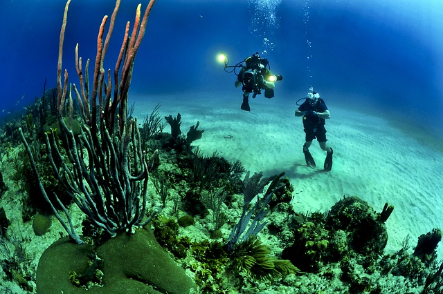 specialisaties duiken