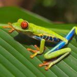 Snorkelen in Costa Rica