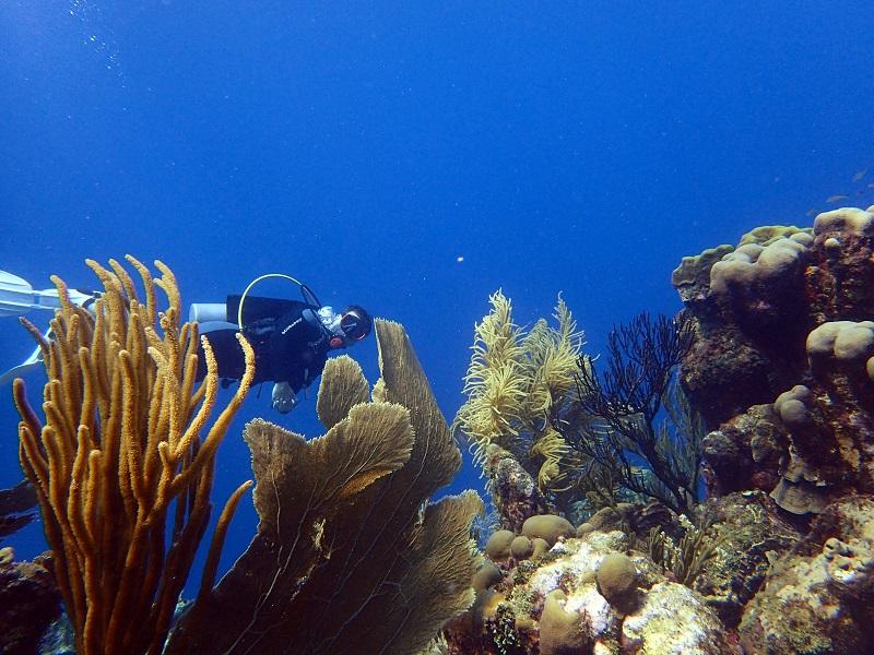 duiken op Curaçao bij Oostpunt