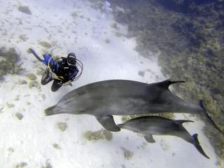 Timia duikt met dolfijnen
