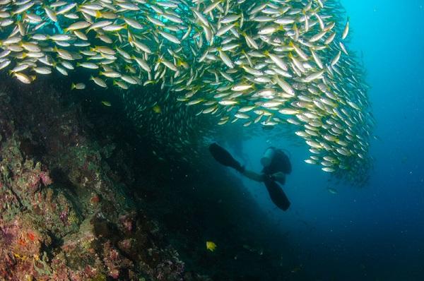 duiken in Phuket met snappers bij Koh Bida Nok Phi Phi