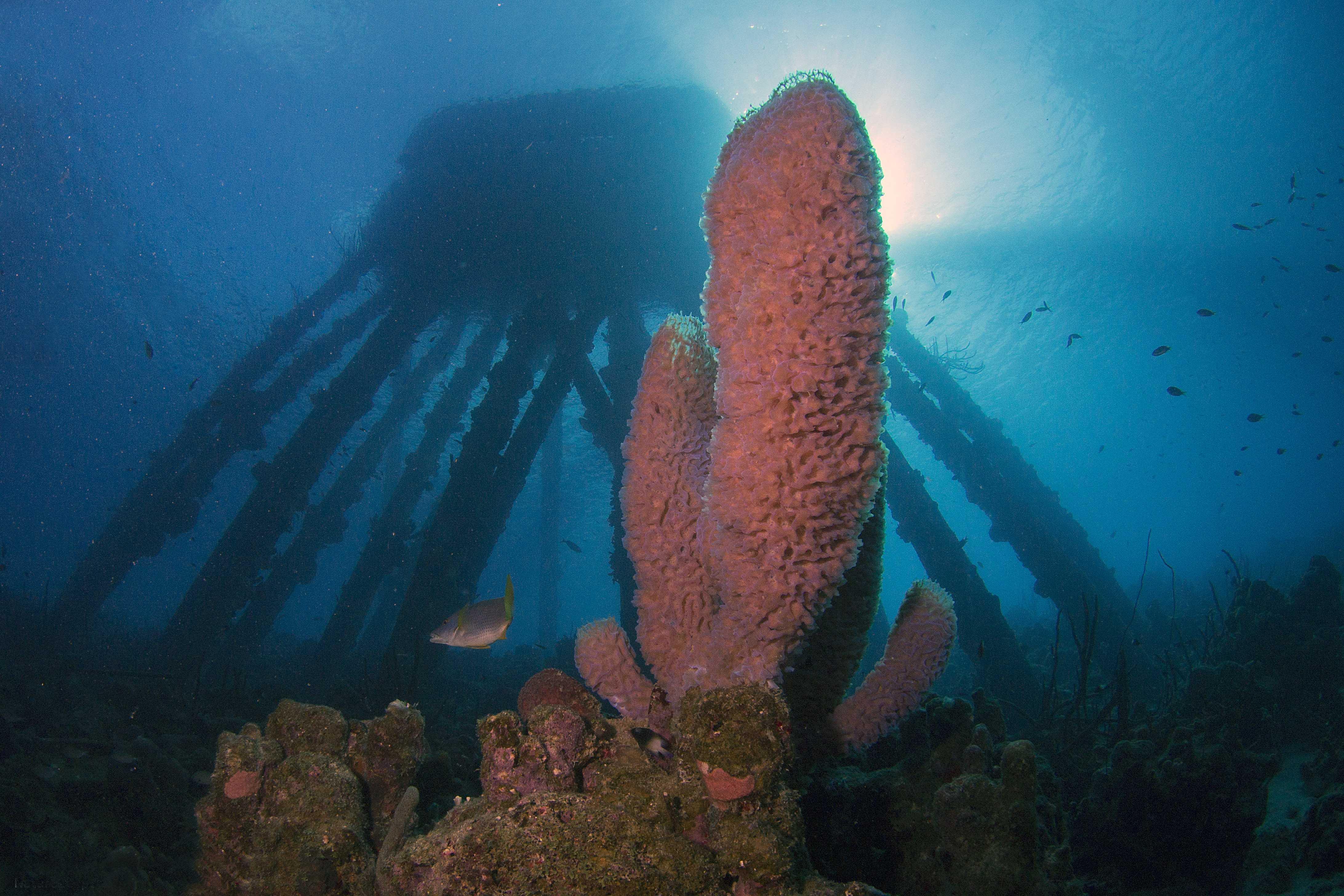 Duiken op Bonaire bij de zoutpier