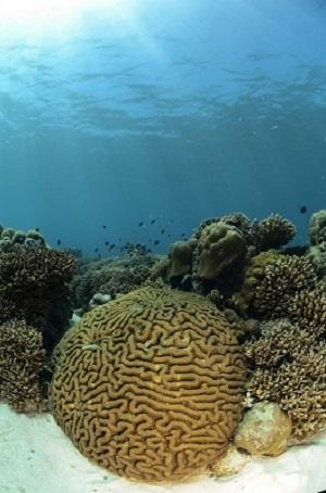 Duiken op de Seychellen bij Bay Ternay Marine