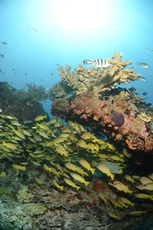 Duiken op de Seychellen bij Brissare Rocks