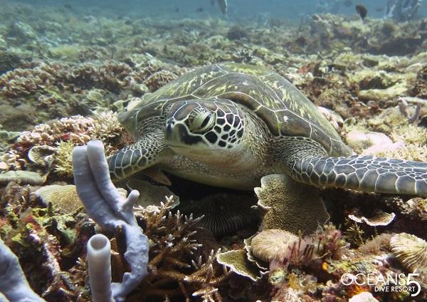 Snorkelen met schildpadden bij Gili Meno