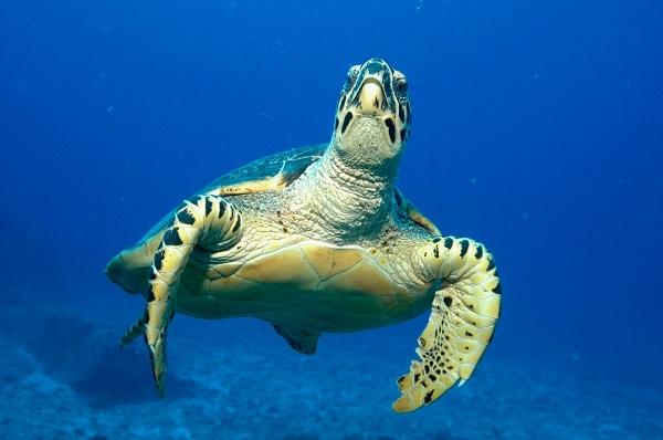 schildpad bij Shark Bank seychellen