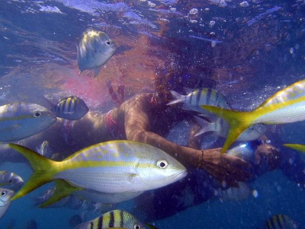 Snorkelen in Cuba