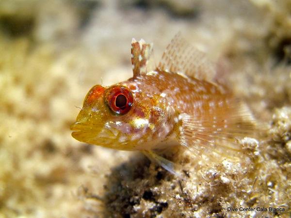 Sllijmvissen