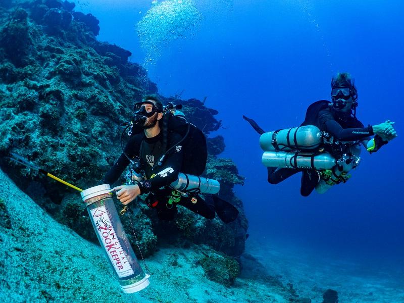 Technisch duiken op de Bay Islands
